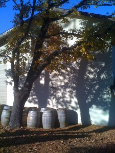 Holly Hill Vineyard (11/16/09)