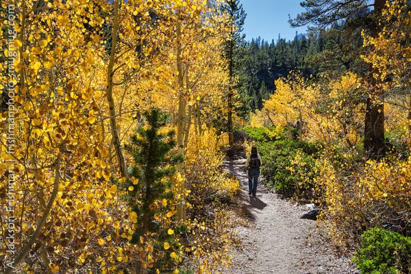 N. Fork Big Pine Creek (10/10/15) Jackson Frishman