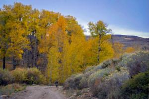 Road to Lobdell Lake (10/27/15) Alicia Vennos