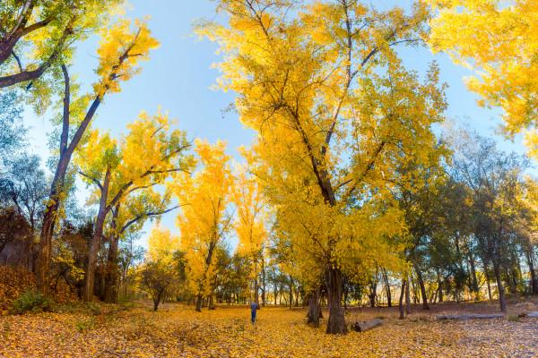 Cottonwood, Redding (11/15/15) Cory Poole