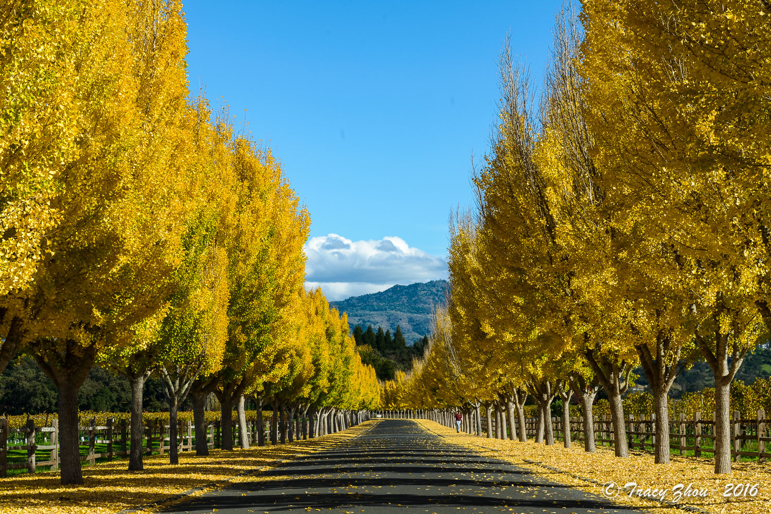 spring and fall When is the beginning day of fall find out autumn start dates for  the autumn (fall) equinox in the northern hemisphere is the spring equinox in the southern.