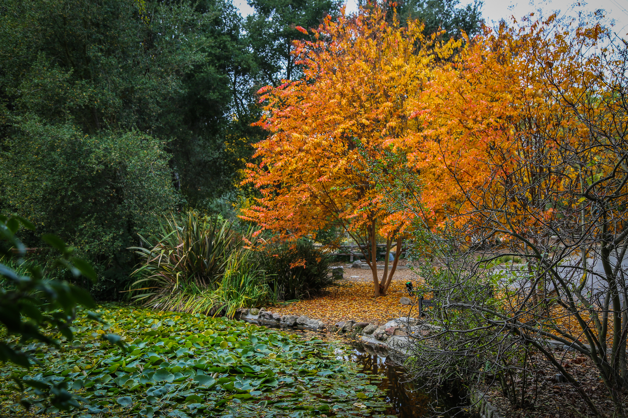 LA\'s Descanso Gardens Becomes an Enchanted Forest – California Fall ...