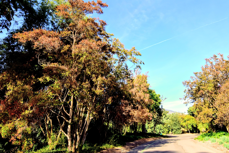 LA County Owns December – California Fall Color