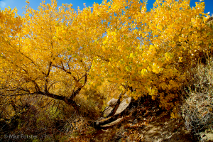 Cottonwood Canyon, Death Valley NP (11/30/14) Max Forster
